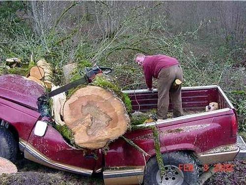 arbre sur pick up