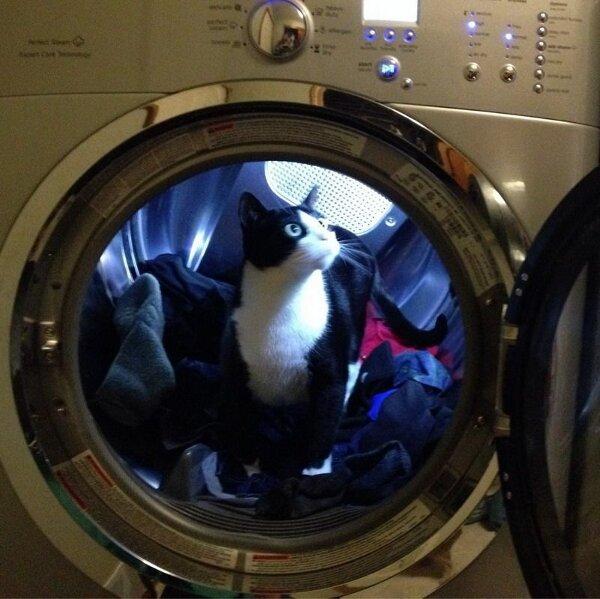 chat dans une machine à laver