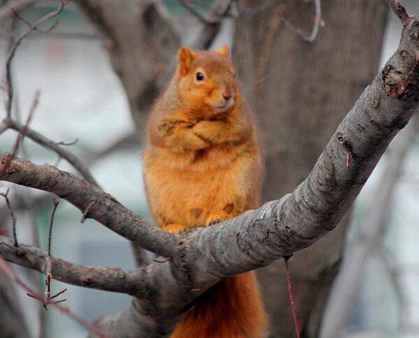 écureuil sur un arbre like a boss